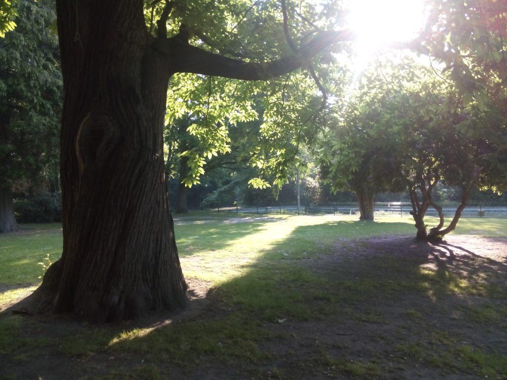 De tamme kastanje op de ligweide naast de zwemvijver is de dikste en wellicht ook oudste boom van het park
